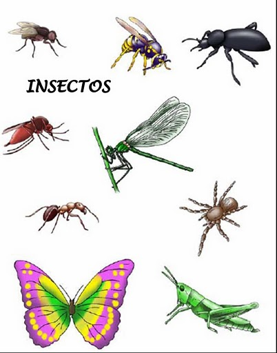 Insectos Con I Colouring Pages